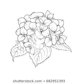 Images Photos Et Images Hortensia Vecteur In 2020 Flower Line Drawings Hydrangea Tattoo Flower Drawing
