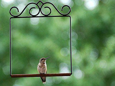 72187cec5f9e2e6275fb4de5c200b1f7 - How To Get A Hummingbird To Land On Your Finger