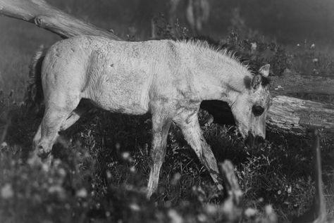 fotografie Little horse @ @ @...