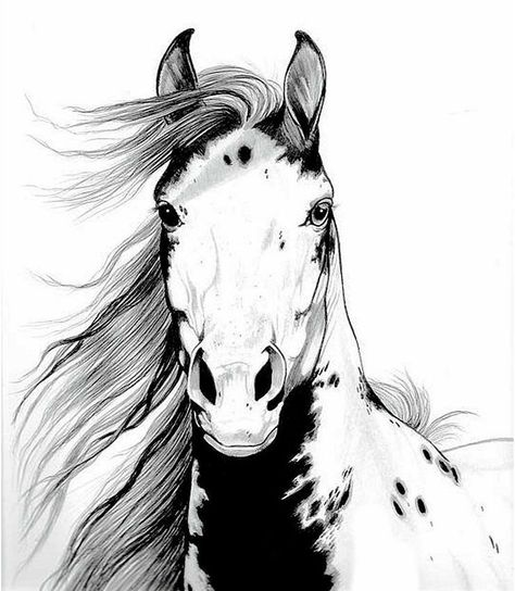 A Wild Mustang I called Geronimo by Cheryl Poland