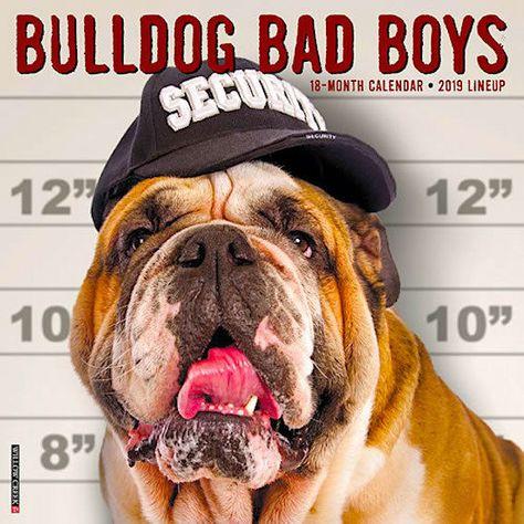 2019 Bulldog Bad Boys English Bull Dogs Hey Gonzaga Wall Calendar