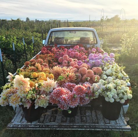 This bunch of flowers on a truck is the perfect floral inspiration.