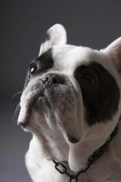 Learn Even More Details On Frenchies Visit Our Website