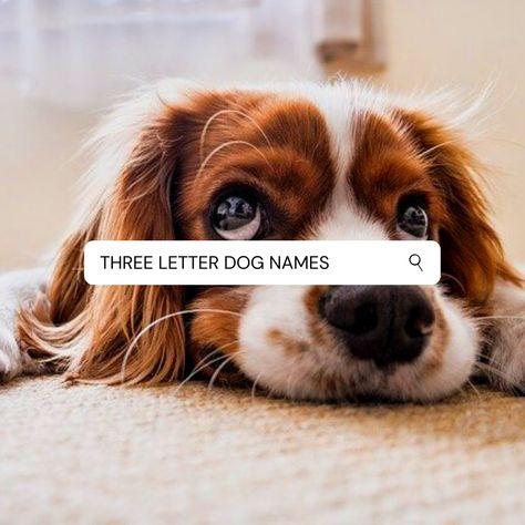 #dogs #goldenretrieverpuppy #goldenretrievers #puppypic #puppys #goldenretrieverlovers #puppypaws #puppy #goldenretriever #dogsitting #puppylove #goldenretrieverlover #goldenretrievertoday #goldenretrieveroftheday