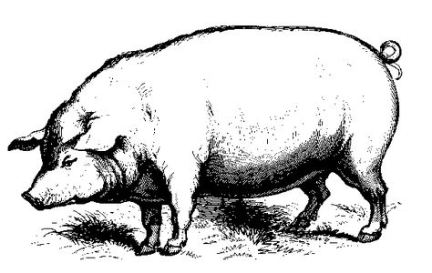 Two Men And A Little Farm A Pig Is Coming Pig Clipart Pig Drawing Farm Prints
