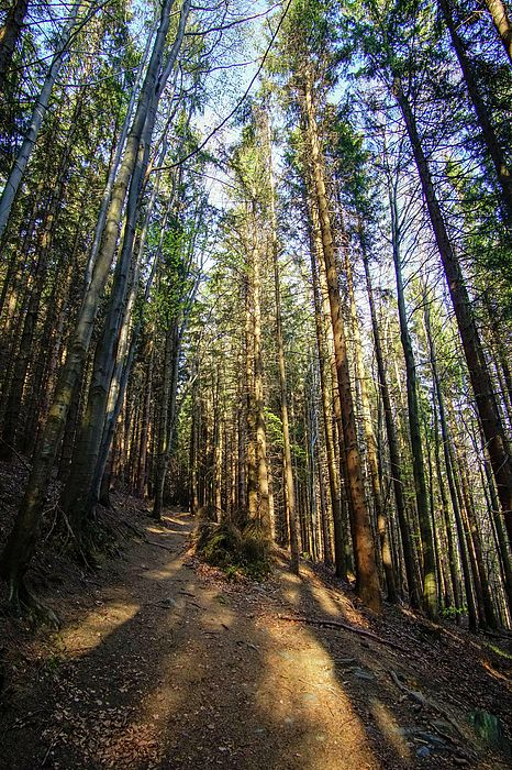 Forest Landscape Photography Nature Photography Buy Photography