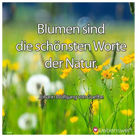 Blumen sind die schönsten Worte der Natur. (Johann Wolfgang von Goethe) #sprüche #blumen #natur