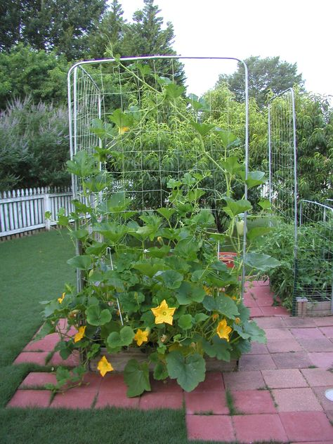 Growing vegetables in limited space