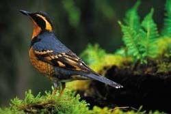 Pin By Cristina Loebb On Beatiful And Colorful Birds Wild Birds Unlimited Wild Birds Backyard Birds