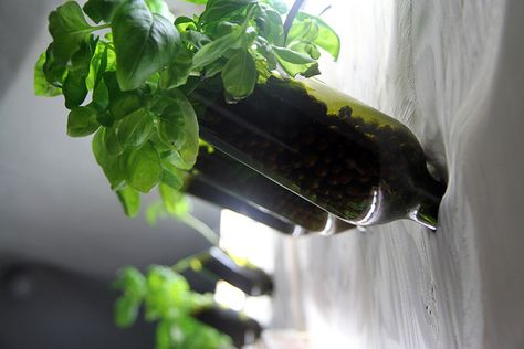#Hydroponic indoor vertical garden wall made from recycled wine bottles.