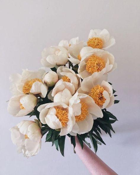 My Flower, Beautiful Flowers, Flower Market, Flower Shops, Flower Aesthetic, Peonies, Floral Arrangements, Planting Flowers, Geraniums