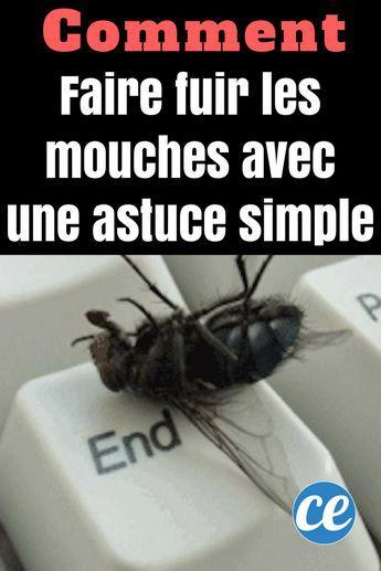 Faire Fuir Les Mouches : faire, mouches, Comment, Mouches, Astuce, Toute, Simple., Faire, Mouches,, Éloigner, éloigner