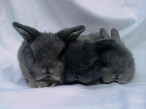 Are these bunnies too cute?