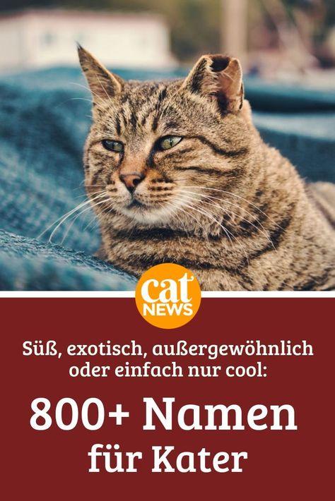 Katernamen Von A Z Die Liste Fur Mannliche Katzen 800 Katzen