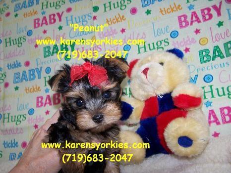 Pin On Stuff To Buy Puppie