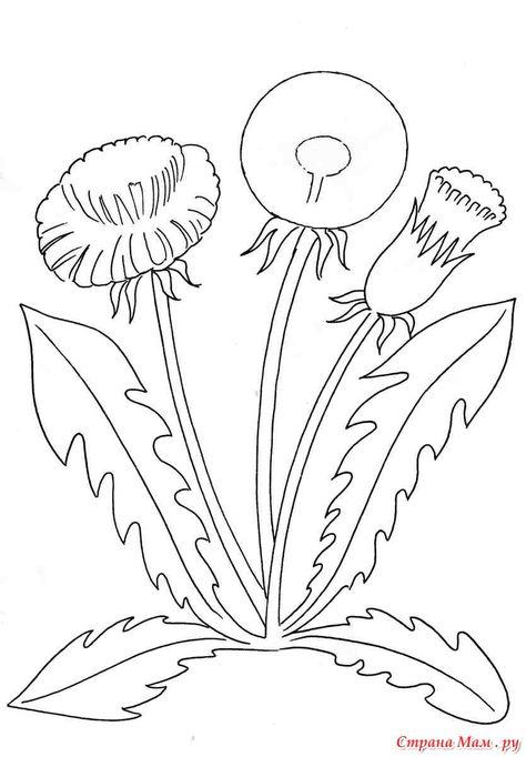 Polevye Cvety Cvety Risovanie Cvetov I Raskraski