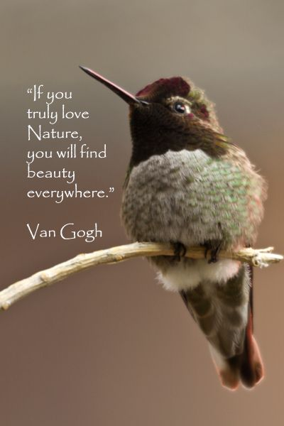 """""""If you truly love Nature, you will find beauty everywhere."""" – Van Gogh – On image of hummingbird taken in Tucson, Arizona, by Florence McGinn"""