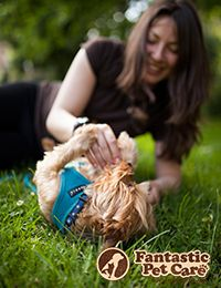 Pet Care Services In London By Fantastic Pet Care We Provide A Range Of Pet Care Services In London To Sui Pet Care Pet Sitting Services Pet Sitters