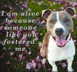 Carson Fosters Foster Rescue Matching Service For Carson Shelter Dogs And Cats In Los Angeles California Carson Fosters Finds Foster Dogs Pets Dog Walking