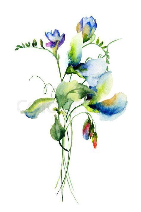 Drawing Flowers Watercolor Sweet Peas 53 Ideas Drawing Flowers