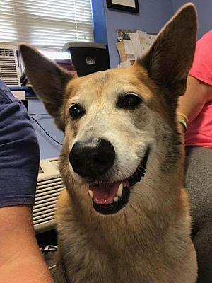 Lagrange In German Shepherd Dog Meet Titan A Dog For Adoption
