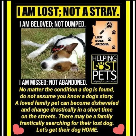 Think Lost Not Stray Losing A Dog Losing A Pet Dog Stories
