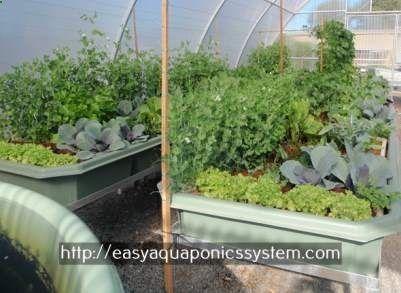 aquaponics store - hydroponic system design aquaponics meaning