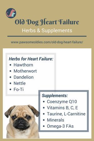 Old Dog Heart Failure A Holistic Approach To Treating Chf In Dogs Pawsomeoldies Com Heart Failure Congestive Heart Failure Old Dogs