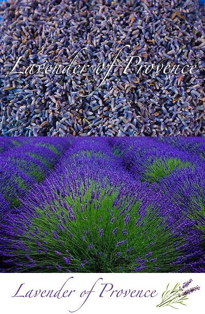 Dried Flowers 16493 Lavender Of Provence Organic Bulk French Flower Buds 1 4 8 10 16 Lb Oz Buy It Now Only 14 99 French Flowers Flower Bud Dried Flowers