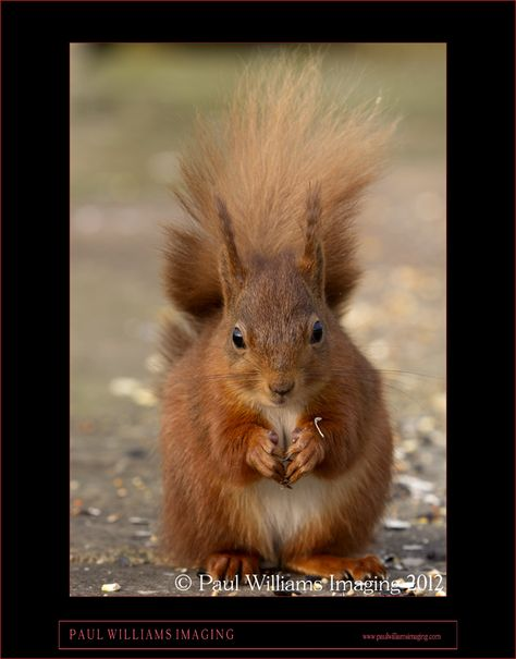 One of a number of images I took of two red squirrels in the Dales near to where I was staying...