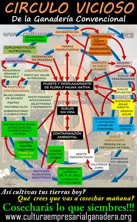 Circulo vicioso de la Ganadería Convencional - CULTURA EMPRESARIAL GANADERA