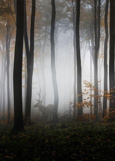 "enantiodromija: "" Into the Woods by Veselin Atanasov "" | Photo on wood, Scenery, Photo"