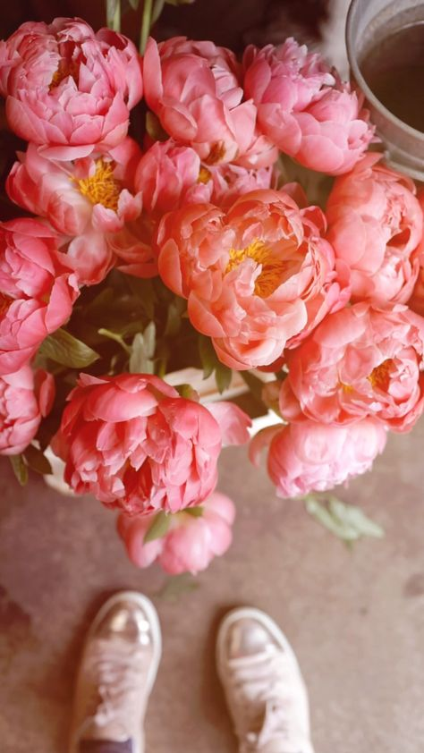 Pink peonies in the flower shop. Vertical video clips by Xanthe Berkeley.