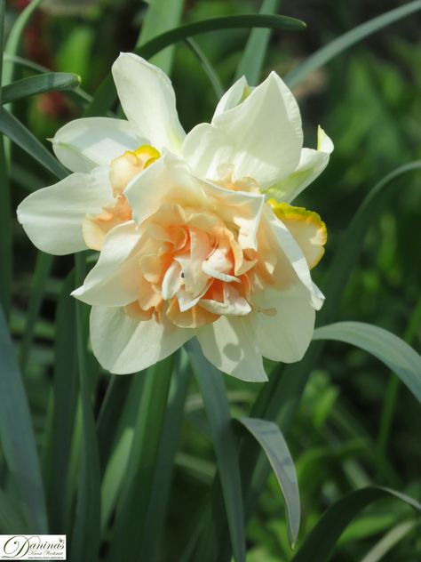 frühlingsblumen im garten  frühlingsblumen blumen bilder