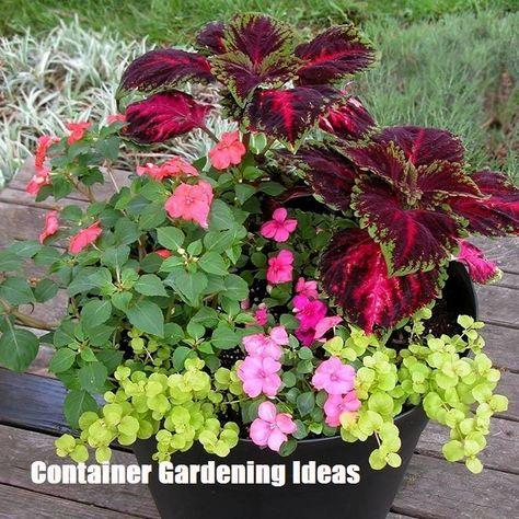 Container Gardening Ideas Container Gardening Flowers Container Flowers Garden Containers
