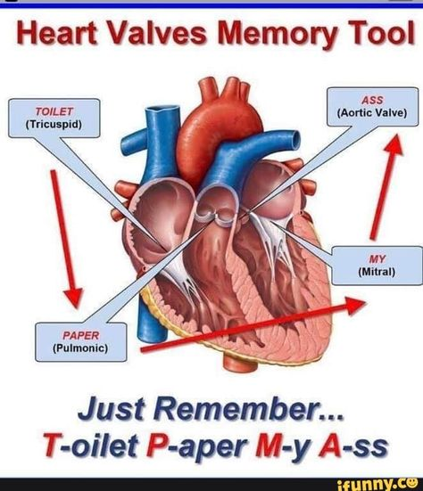 20 Ideas For Medical Terminology Cardiology terminology – – Technology Updated Ideas Cardiac Nursing, Nursing Mnemonics, Heart Anatomy, Heart Valves Anatomy, Nursing School Notes, Nursing Schools, Medical Coding, Medical Billing, Medical Terminology
