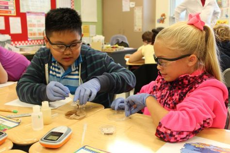 Army's Edgewood Chemical Biological Center adds fun factor, earthworms to elementary science lessons