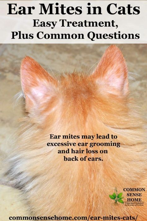 Ear Mites In Cats Easy Treatment Plus Common Questions In 2020 Cat Ear Mites Cat Skin Cat Remedies