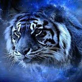 Jasa Pengisian Khodam Harimau Putih Harimau Putih Harimau Hewan