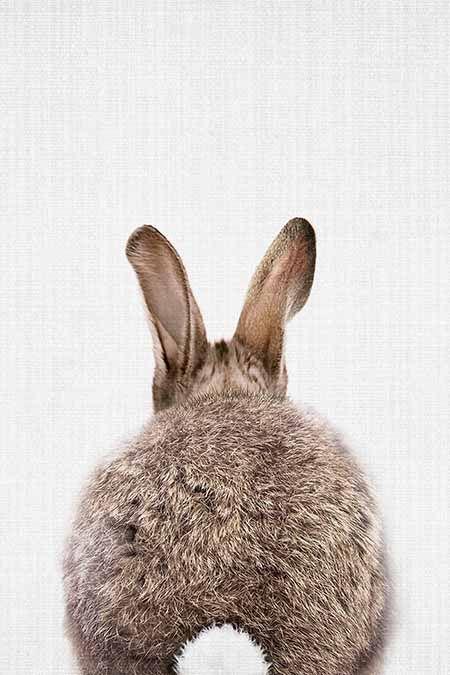 print 8x10 bunny rabbit wildlife flower nursery decor children baby kid room