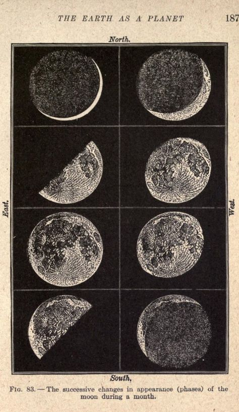I would love a poster sized print of this please. The phases of the Moon. Laboratory lessons in general astronomie nemfrog Vintage Prints, Vintage Art, Vintage Space, Vintage Travel, Photowall Ideas, Science Room, Science Art, Earth Science, Physical Science