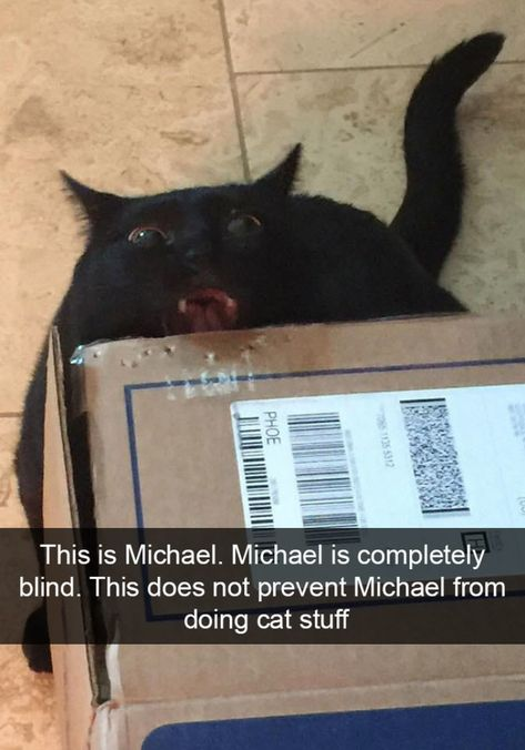 Cat Snapchats That Will Leave You With The Biggest Smile Part 2 - Tiredbee.com