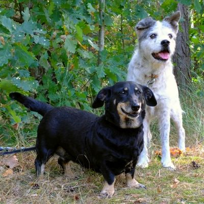 Tierheim Markisch Buchholz Hundevermittlung Hunde Vermittlung