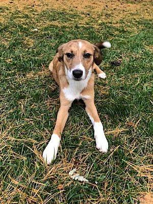 Today S Wednesday Hunk Is Bruno Aka Handsome From Albany Western Australia Wiener Dog Dachshund Doxie