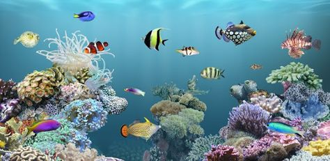 Download Full Hd 3d Aquarium Wallpapers Desain