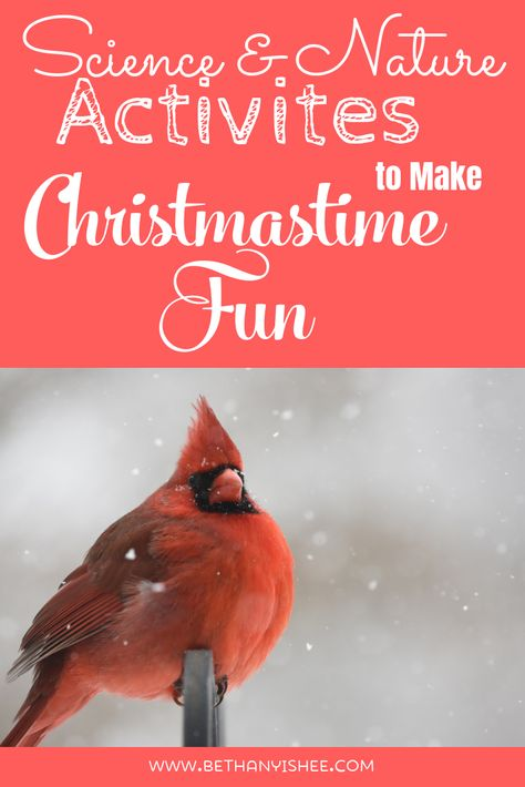 Make homeschooling fun this holiday season with Christmas themed science and nature activities. There is so much science and nature you can connect to the Christmas season in your homeschool.