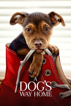 A Dogs Way Home 2019 Full Movie Watch Online Free Download Free Movies Online Full Movies Online Free Full Movies Online