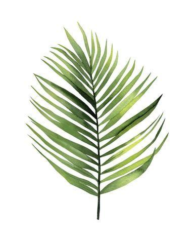 Palm Leaf I Leaf Illustration Painted Leaves Watercolor Leaves