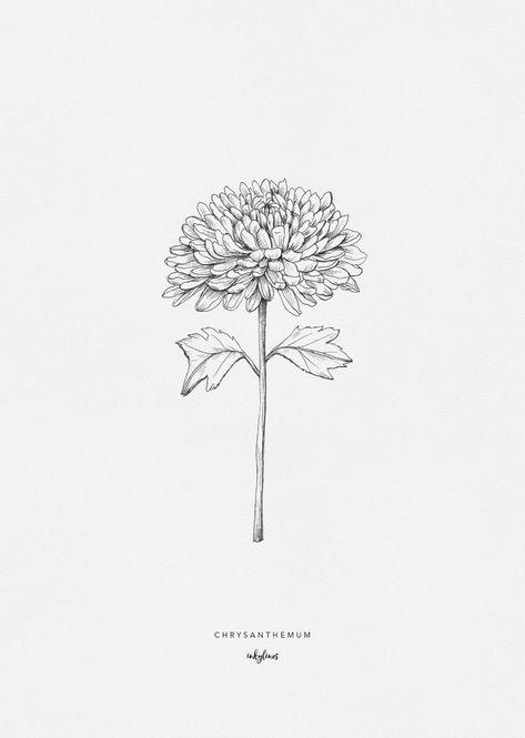 Chrysantheme chrysanthemum - New Site Ink Master Tattoos, Brown Tattoo Ink, Silver Tattoo, Chrysanthemum Drawing, Drawing Flowers, Chrysanthemum Flower, Flower Sketches, Crysanthemum Tattoo, Maybelline Matte Ink