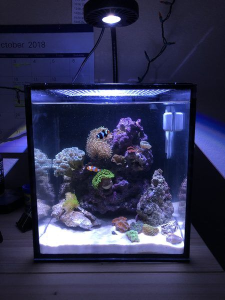 Nano Reef Aquarium Community Learn How To Keep A Small Saltwater Reef Tank Of Your Own Marine Fish Tanks Reef Tank Saltwater Aquarium Fish